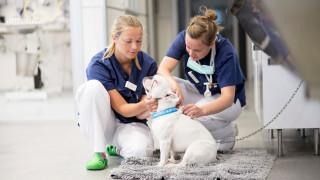 dog and veterinarian