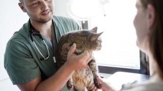 katt veterinär undersökning