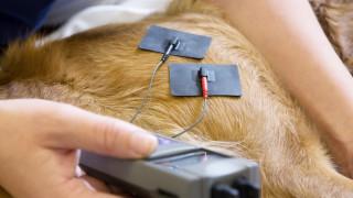 hund får elektroterapi