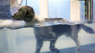 brun och vit hund springer på löpband i vatten