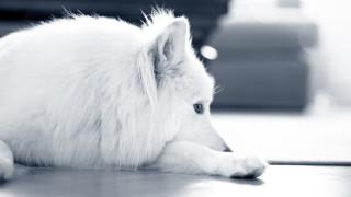 hund slappnar av på golvet