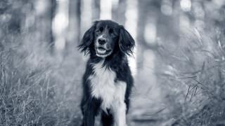 svartvit glad hund utomhus tittar in i kameran