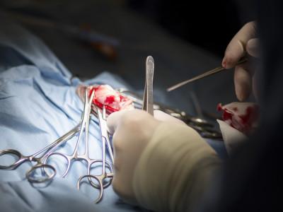 service neurologie et neurochirurgie clinique AniCura Armonia à Villefontaine
