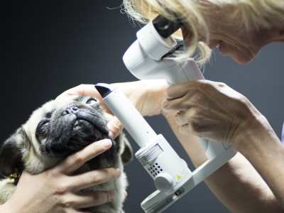 Service Ophtalmologie clinique AniCura LorraineVet à Ludres près de Nancy