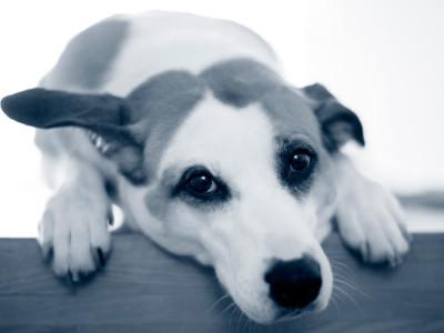 Nyfiken hund