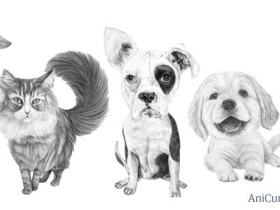 Illustration tre hundar och en katt
