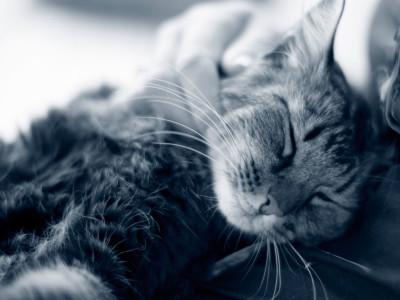 Katt i famnen
