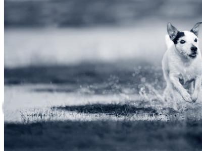 Hond loopt mank