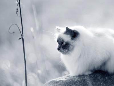 wat zijn de symptomen van diabetes bij katten