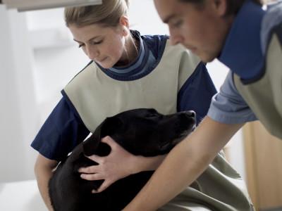 Case: Acuut kreupele hond