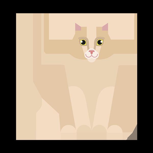 Sibirisk kat
