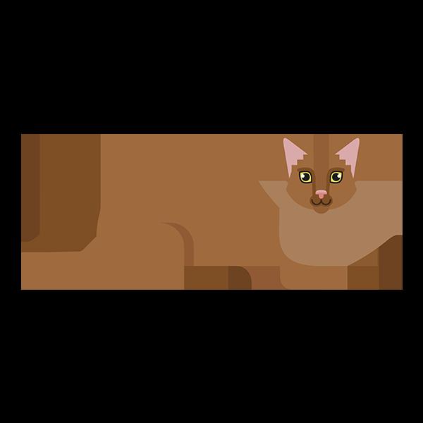 Somali kat