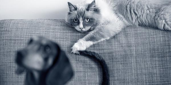 Katze und Dackel