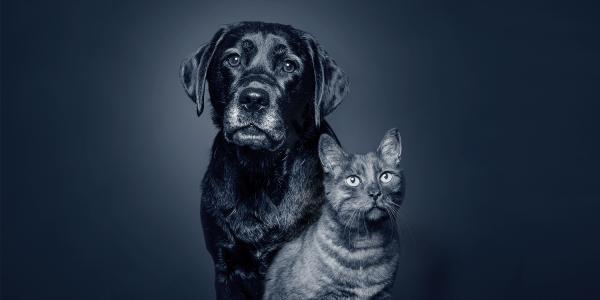 Hunde- und Katzensenior