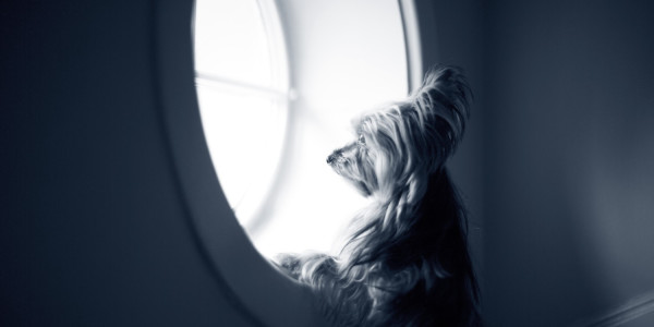 Sådan kan du aktivere din hund mens I er hjemme