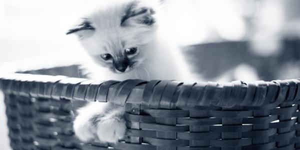 Sådan kan du aktivere din kat indendøre