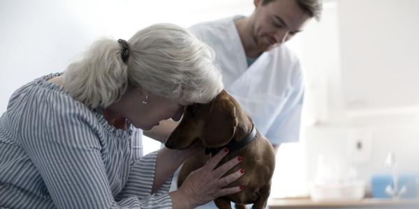 claves asistencia veterinaria de calidad
