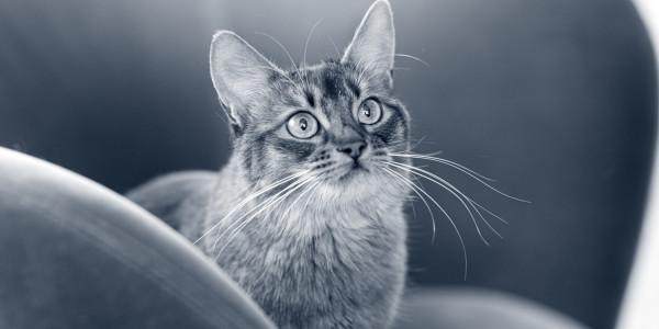 Osteomelitis secundaria a un mordisco de gato