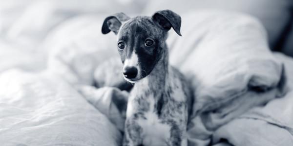 mascotas cáncer de piel