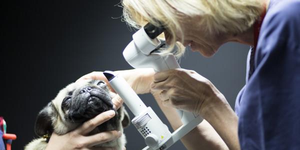 Oftalmología en Mascotas