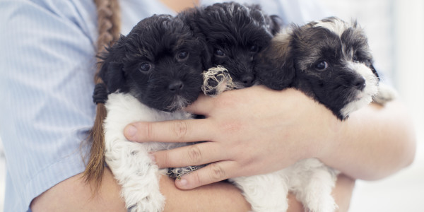 AniCura puppy's