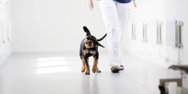 dierenarts met hond in de gang