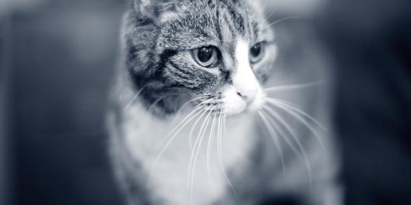 Kat: maand van de oudere kat