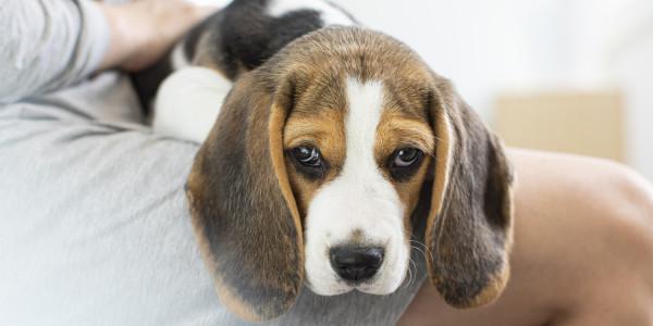 puppy op schoot