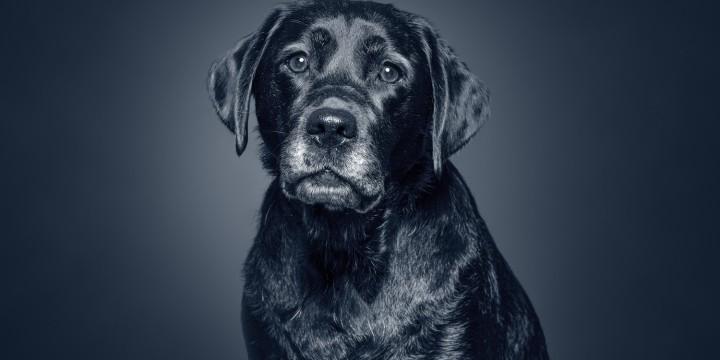 Læs mere om  AniCura Seniortjek af hund