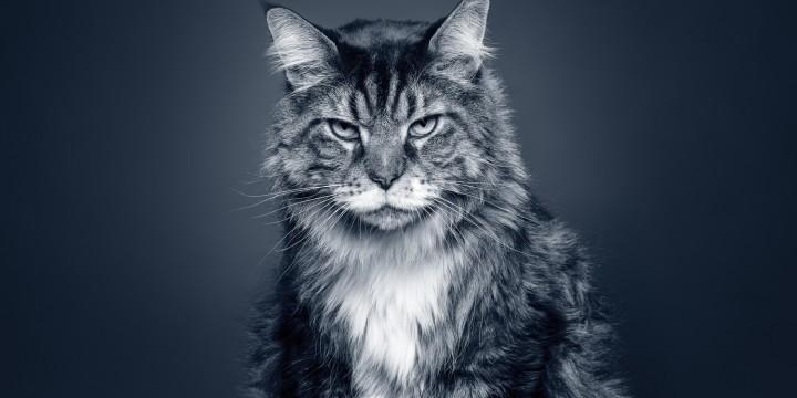 Læs mere om AniCura Seniortjek kat