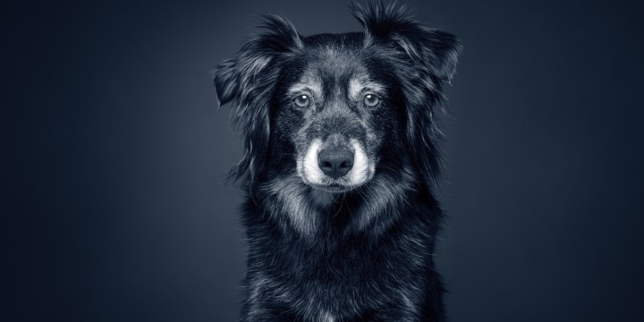 seniorhund seniortjek