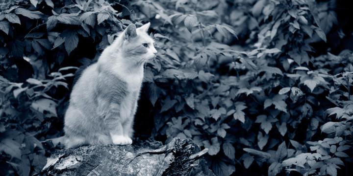 Katt i skogen