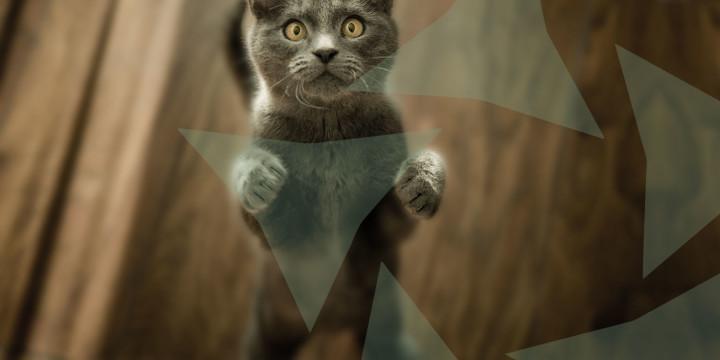 dierenarts assistent met kat
