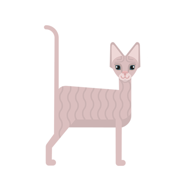 Choisir une race de chat en fonction de votre style de vie