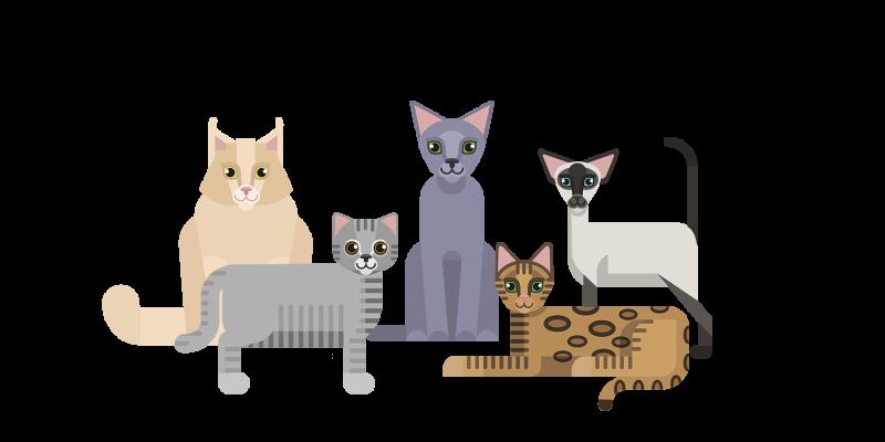 Présentation des races de chats