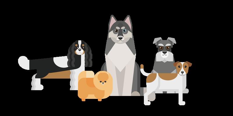 Présentation des races de chiens