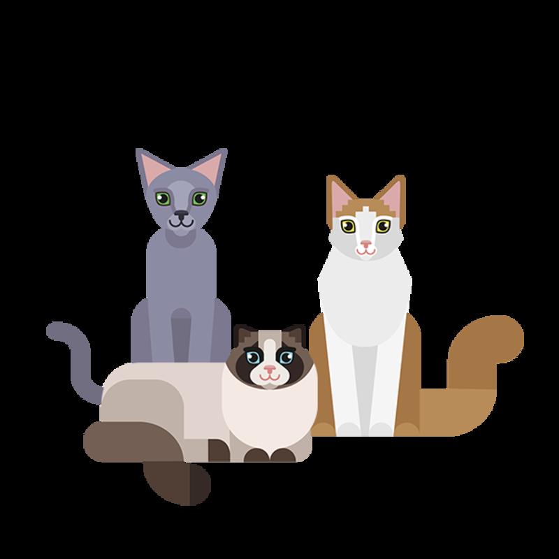 selector razas gato