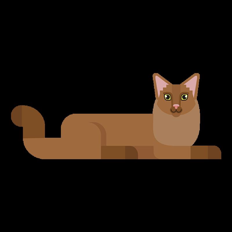 encuentra gato