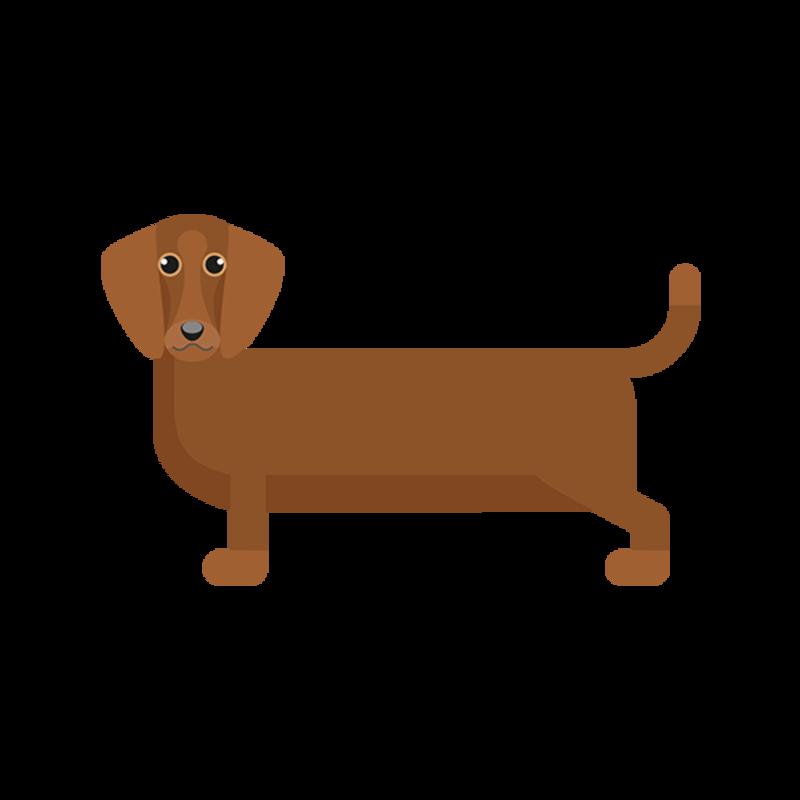 Hvilken Type Hund Passer For Meg