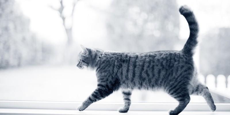 Kat loopt