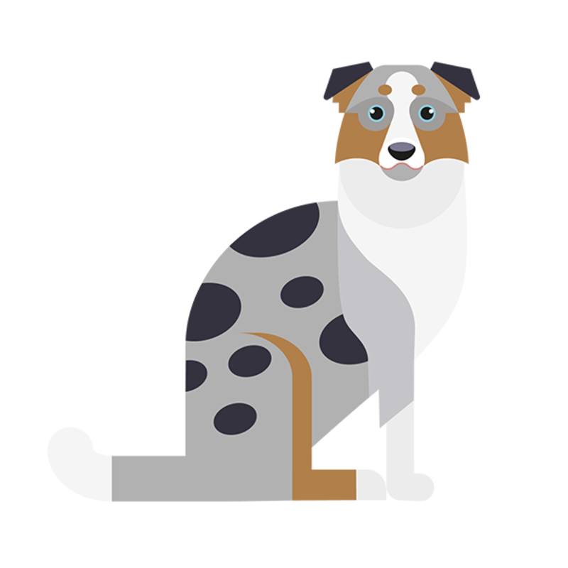 border collie hond