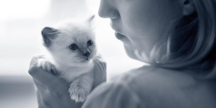 kitten vrouw