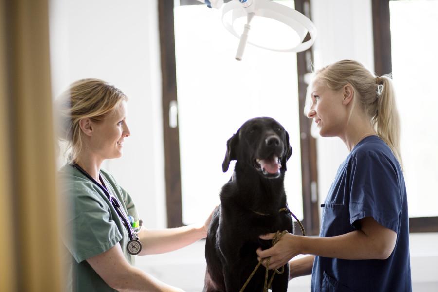 Tierarzt Gemeinschaftspraxis Borken