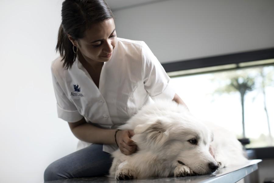 AniCura Canis i Felis Centre Veterinari