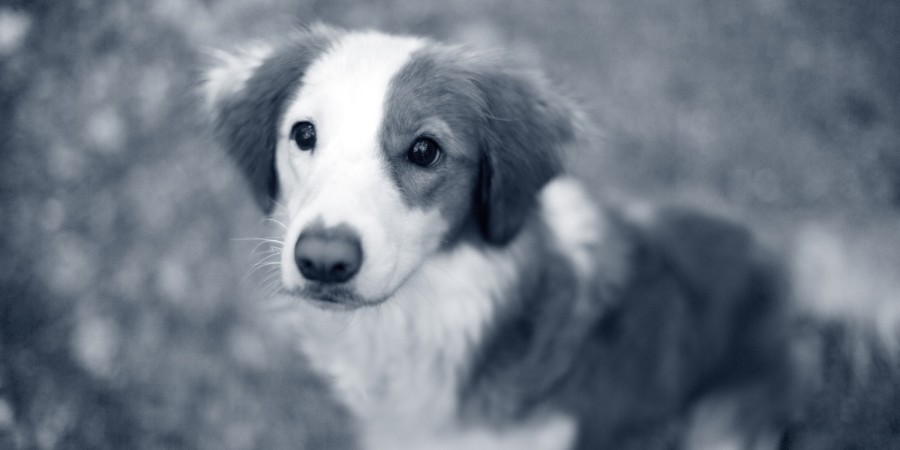 Dierenarts Hoofddorp hond