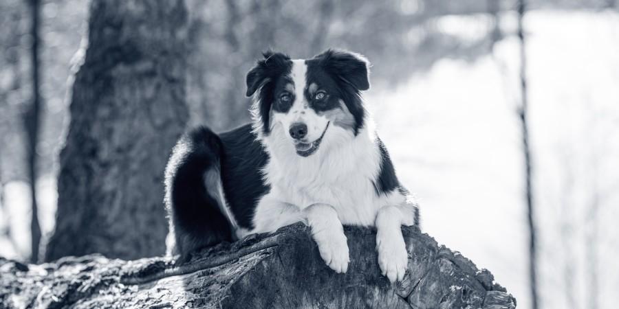 Hond op boomstam