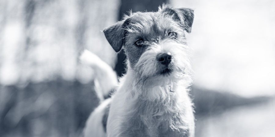 hond in de wei