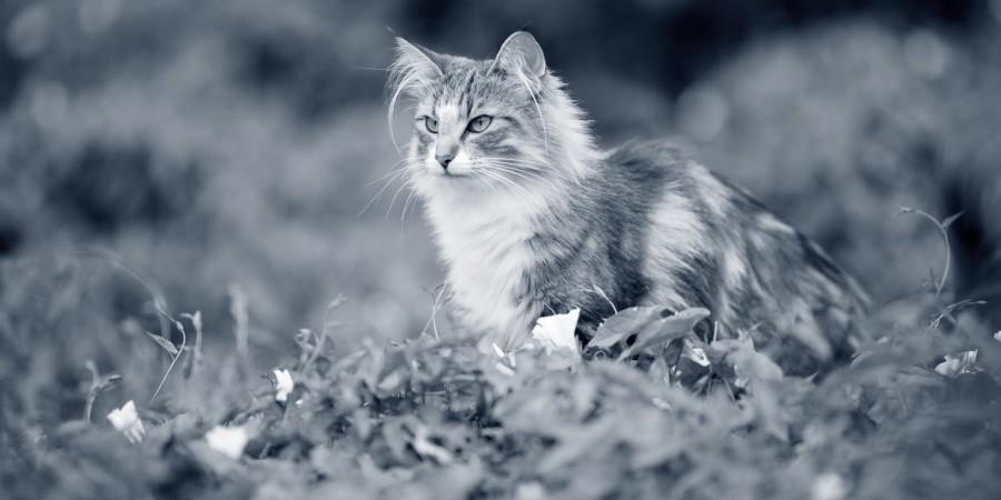 kat in de natuur