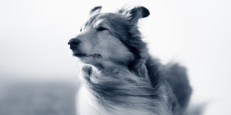 Hond in de wind