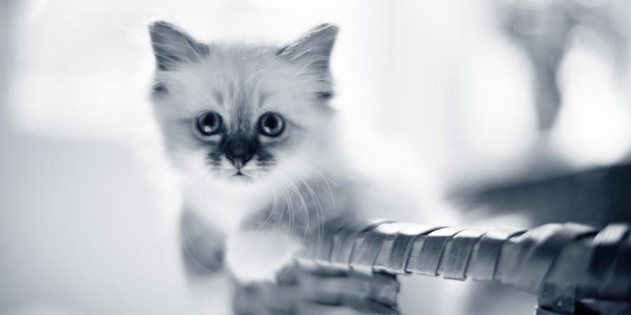 kat dierenarts Assen